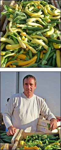 courgette yves combes