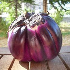Tartines d'aubergine panée, tomate & fêta et prix